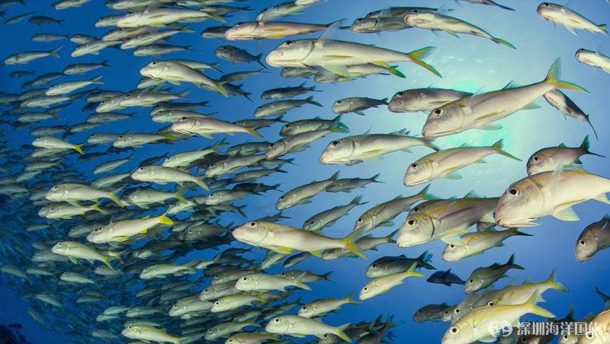 壁纸 动物 海底 海底世界 海洋馆 水族馆 鱼 鱼类 870_490